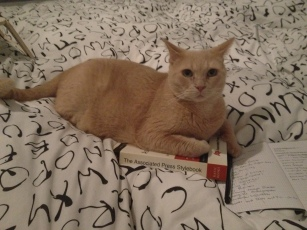 "My kitty, Buff Buff, pretending to read the AP Stylebook makes me say, ""Aw."""