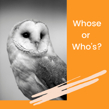 image of owl and the words whose or who's